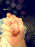 My Hamster by HiBa-JaMal