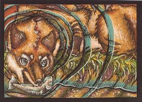 ACEO: Plunge Into the Stream by Redwall151