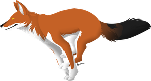 Dhole by Beenabutter