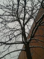 snowy tree by Musicislove12