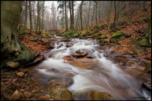Ilsetal, Late Autumn by Dave-Derbis