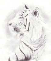 Tiger - Scanned by KittehPirate