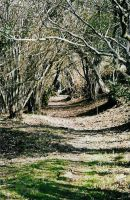 Wooded paths by sunnie