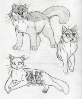 Warrior Cats Set 17 by KasaraWolf