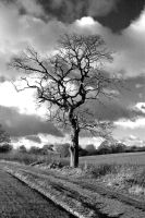 Tree by sutoll