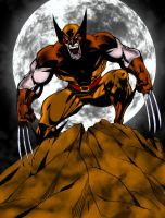 Wolverine... by pascal-verhoef