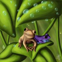 Frogs - After rain by SabakuNoShi