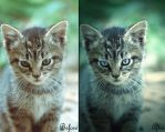 Before an After: Kitten by Yi-Shu-Jia