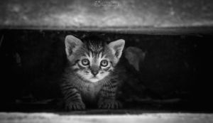 Little kitty hiding by aleexdee