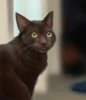 DAY 292. Photo Study - Cat by Cryptid-Creations