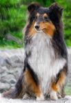 (Commission) Tri-Colored Sheltie (Commission) by Zachary0701