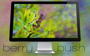 Berry Bush Wallpaper by herky140