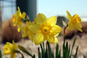 First Flower of Spring by Fossinator1