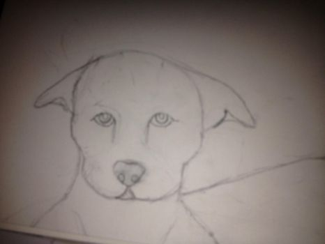 Pitbull Puppy W.I.P by lightning0000