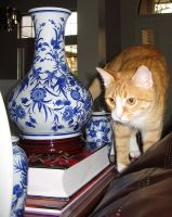 Cat Among Vases by ILoveVacStock