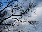 Dark Branches by KiwiRose-Stock