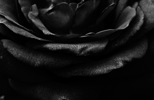 Layers On a Rose :BW: by Lonewolf-Eyes