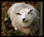 Sheep by NeverPeace