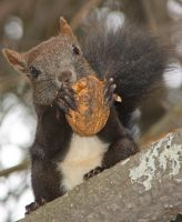 Squirrel's dinner by starykocur