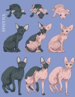 SQuiby- Sphynx Cat by CVDart1990