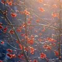 Red sunshine by ketoo