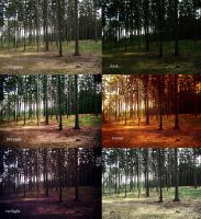 Forest Actions by Miss-Nefer-Stock