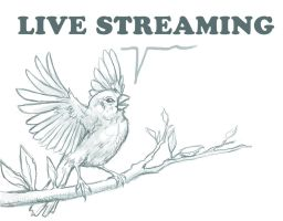 Bird LiveStreaming Offline by charfade