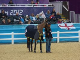 Paralympic Dressage - Italy's Buddy Horse by Belle-Vaux