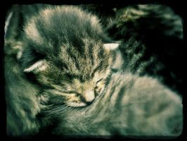 Little ball of fur by Kelido