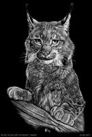 Scratch art: Lynx lynx by theOlven