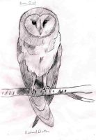Barn Owl by RickyDutton