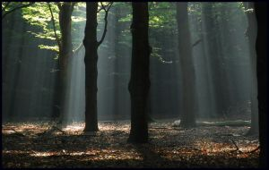 Lightthought 455 by lightthinker