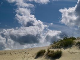 Dunes 3 by rici66