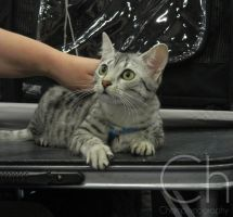 Cat Show 7 by Champineography