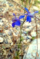 wild flower by ArisAnthopoulos