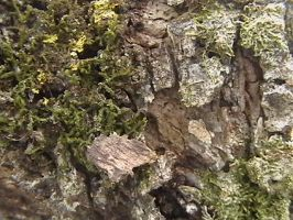 Texture- Natural 06 by texture-resources