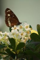 The Butterfly and the Flower by szekley