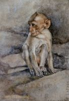 Temple Monkey -Lopburi Thailand - Watercolour by AstridBruning