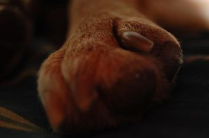 scrappys foot by peacegirrl