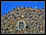 Pigeons Invasion by AlexAnaPhotography