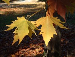 fall leafs by loghry