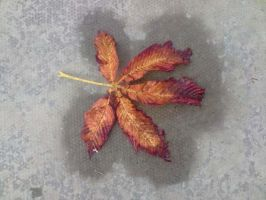 Beautiful Leaf by ClearyBlind