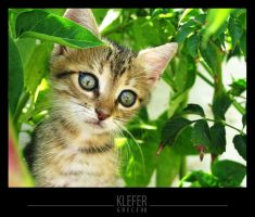 little greek cat by klefer