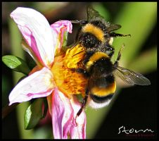 bumble bee v3 by simoner