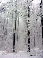 white forest Medvednica by skylight11