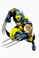 Wolverine  colour by unknownguyver81
