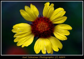 Yellow 3 by KSPhotographic