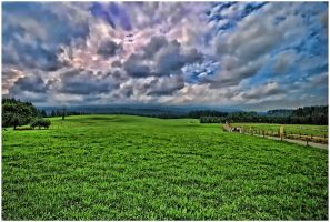 Grass and sky by SenicaG
