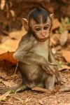 Baby Monkey by spacedoutkat