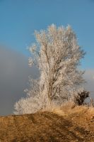 Frosted Treeline by lividity101